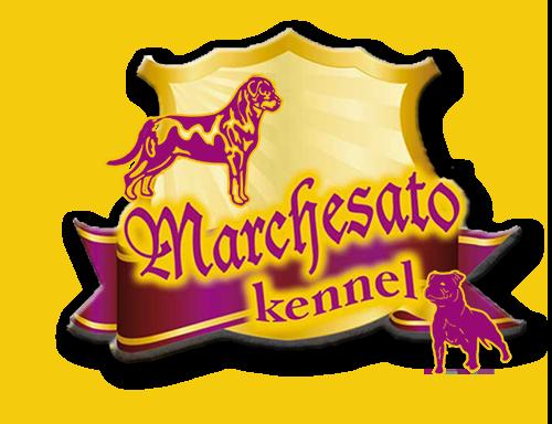 Allevamento del Marchesato - Rottweiler e Staffordshire Bull Terrier