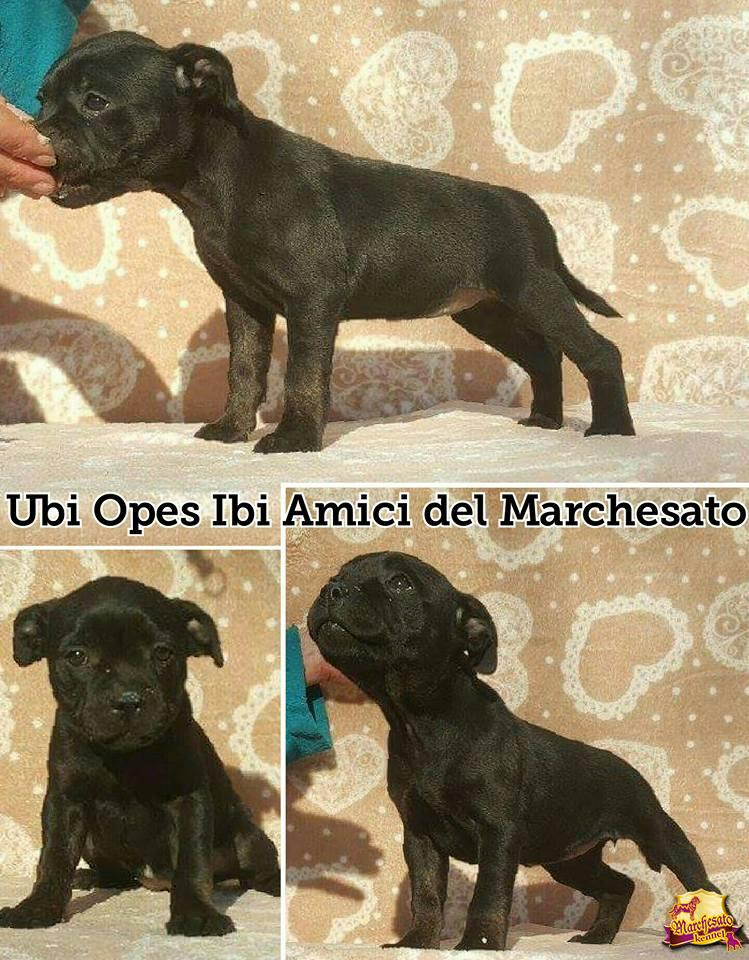 UBI.OPES